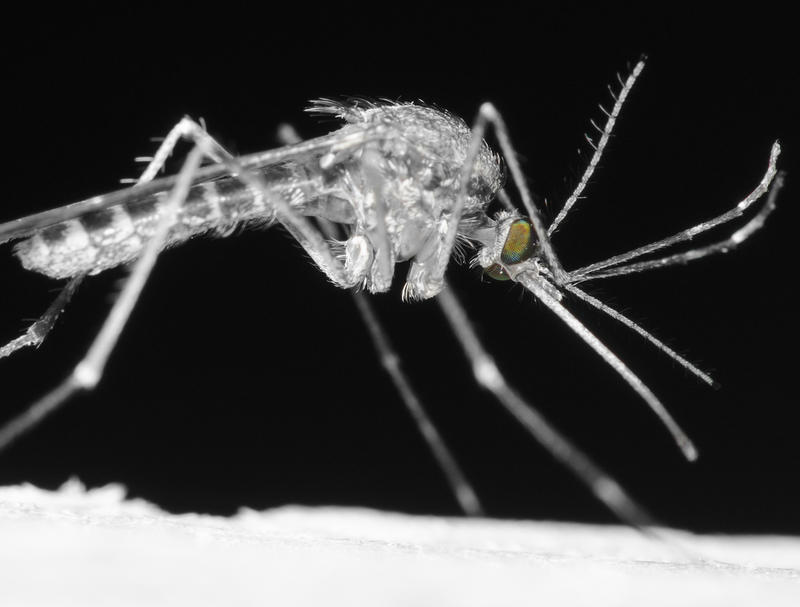 Mosquitos carrying the West Nile virus can transmit it to humans.