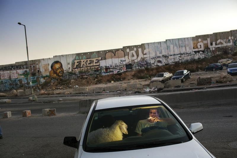 "From ""Occupied Pleasures"": A man smokes a cigarette in his car after going through grueling traffic at the Qalandia check point. He is bringing home a sheep for the upcoming Eid celebration."