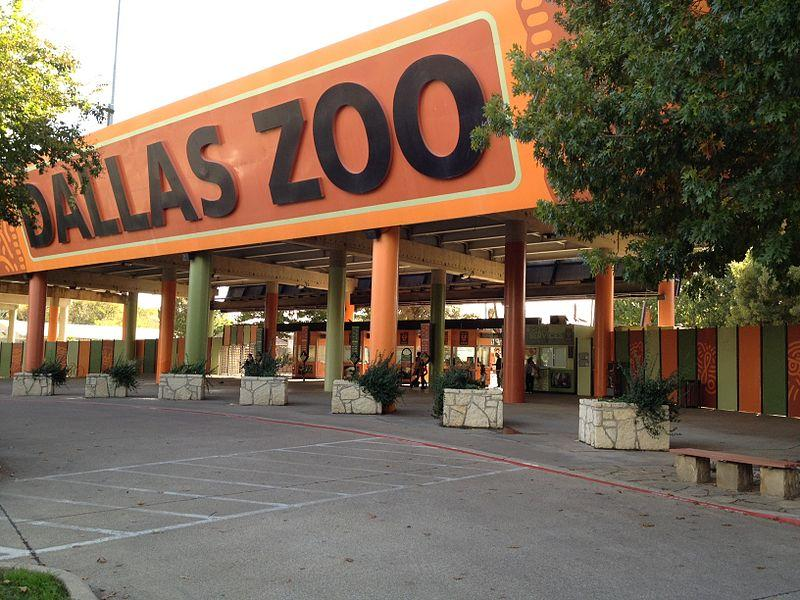 A lion bit and scratched a zookeeper at the Dallas Zoo over the weekend.