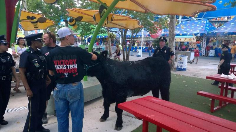 "Max Geron with the Dallas Police Department tweeted this picture with the following note: ""Mooooovin' down the Midway! I don't think @DallasPDMounted carry lassos."""