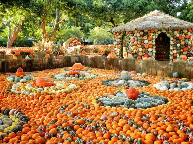 There are 65,000 pumpkins, gourds and squash out and about at the Arboretum.