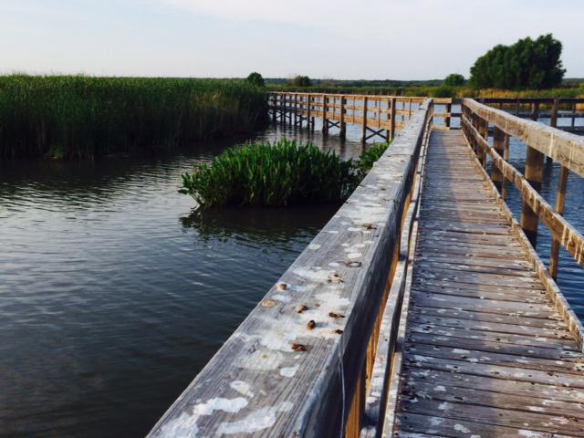 A walkway built into the wetlands allows visitors a close-up view of the wildlife and plants  at the John Bunker Sands Wetland Center.
