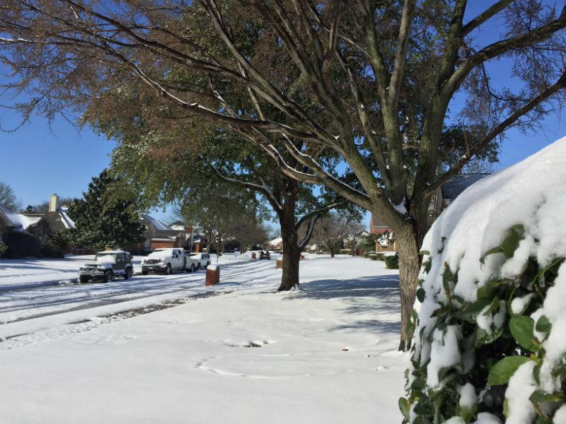 The snow may create problems on the roads, but it sure looks beautiful. A scene from Plano.