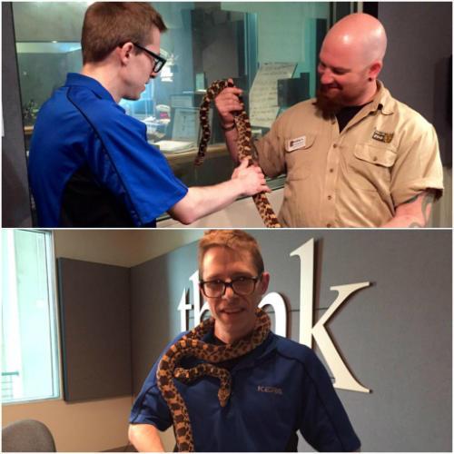 Bradley Lawrence (right) handling a nonvenomous Texas bullsnake with KERA's Justin Martin