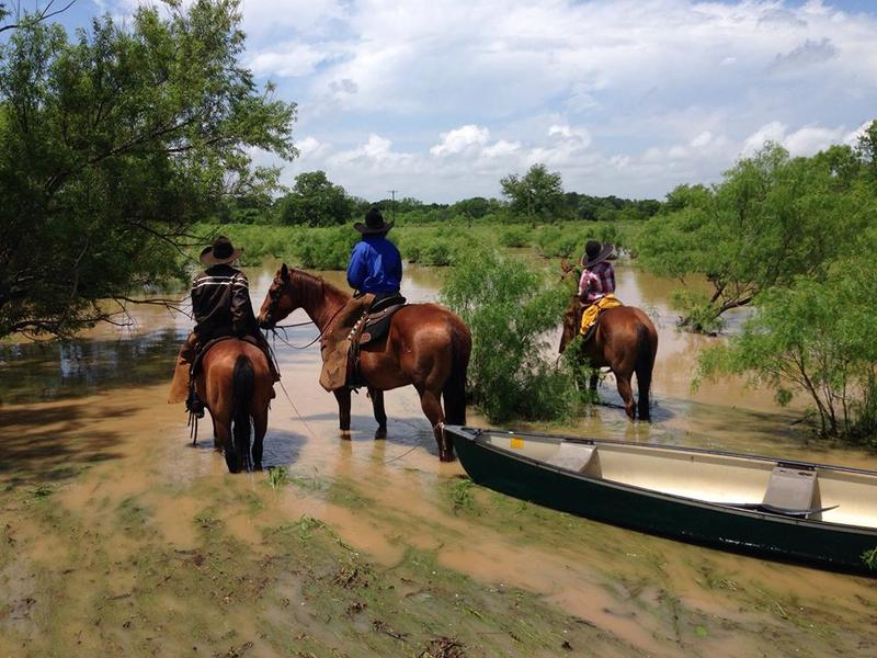 A bunch of cowboys rescued a bunch of horses over the weekend in Eastland, about 90 miles west of Fort Worth.