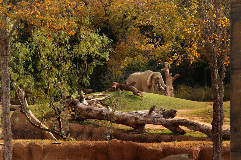 Mama the elephant died Wednesday at the Dallas Zoo.