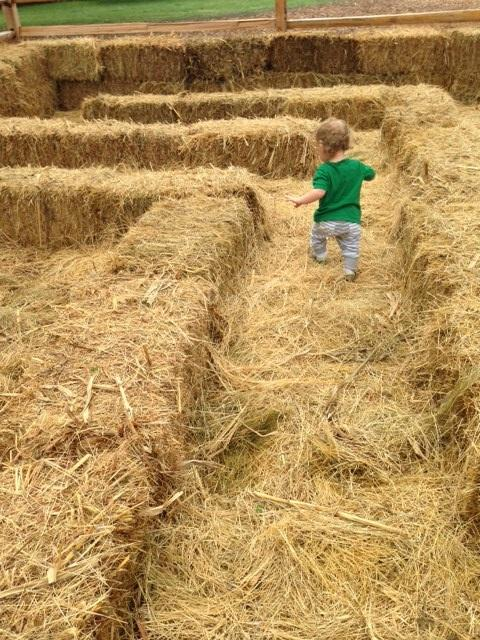 Peter, 14 months, tackles the hay bale maze.