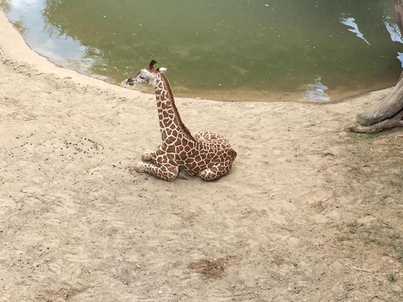 A photo submitted on the zoo's Facebook page.