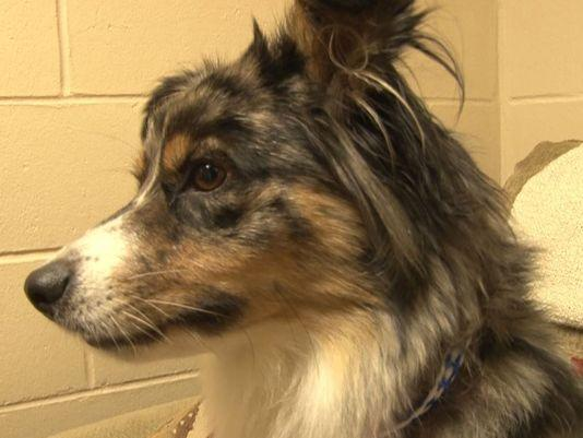 A dog that went missing in Texas last week is back with her family after being found nearly 900 miles away in Florida.