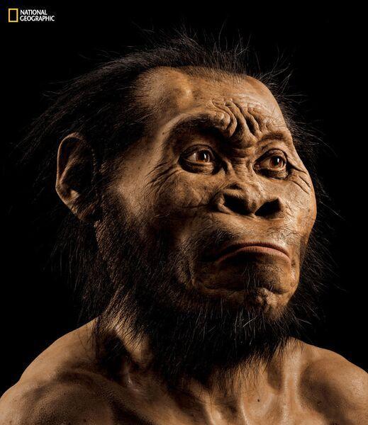 A reconstruction of Homo naledi. Paleoartist John Gurche spent 700 hours recreating the head from bone scans.