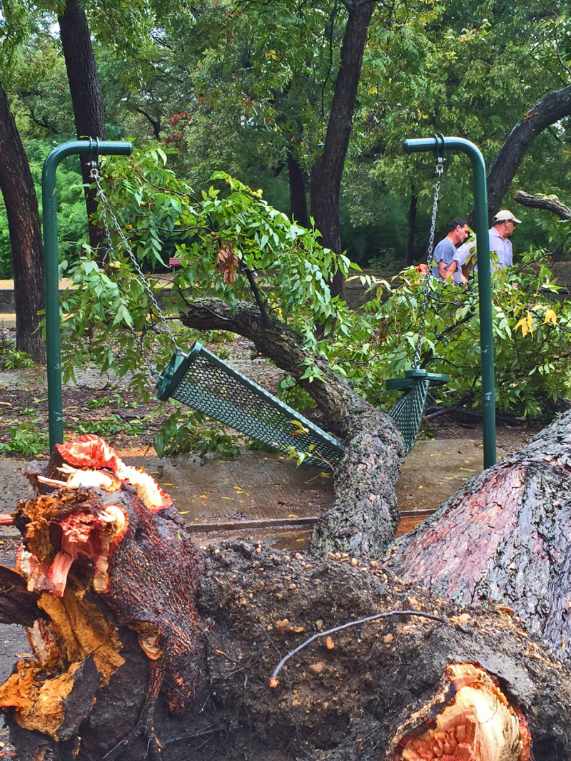 Farmers Branch parks crews work to remove a downed tree from a playground at Gussie Field Watterworth Park.