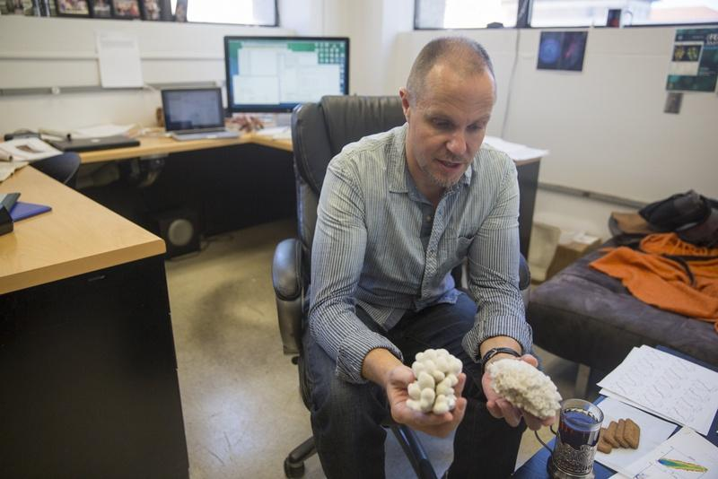 University of Texas at Austin professor Misha Matz is using crowdfunding to raise money for his research into the best ways to protect coral reefs from climate change.