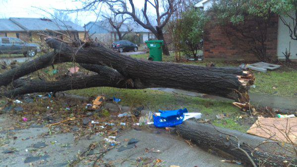 Some trees were ripped from the ground in Rowlett.