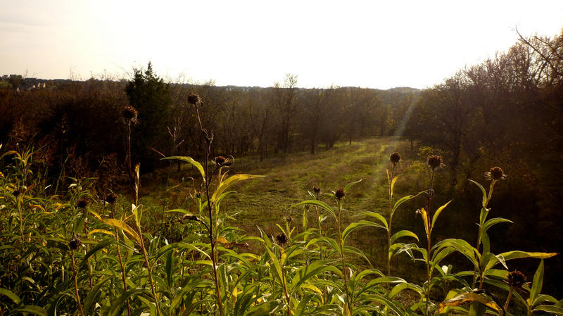 Arbor Hills Nature Preserve in Plano