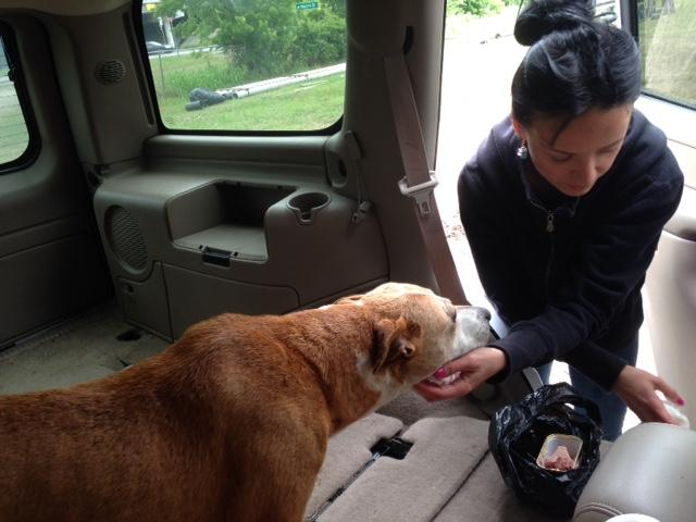 Marina Tarashevska offers some Spam and a pat to a dog she rescued from a field in southeast Dallas.