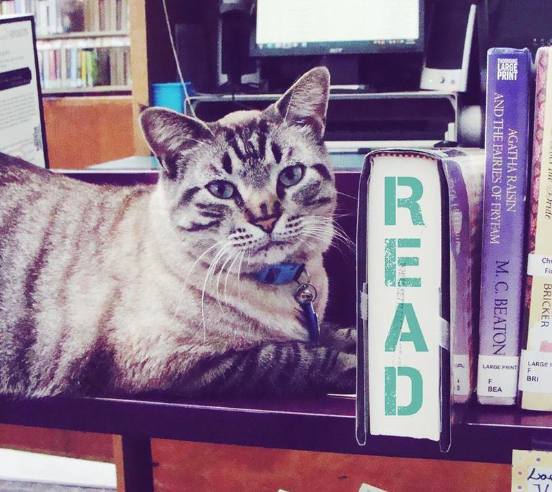 "Browser White has served as ""Chief Library Cat"" at White Settlement Public Library for almost six years."