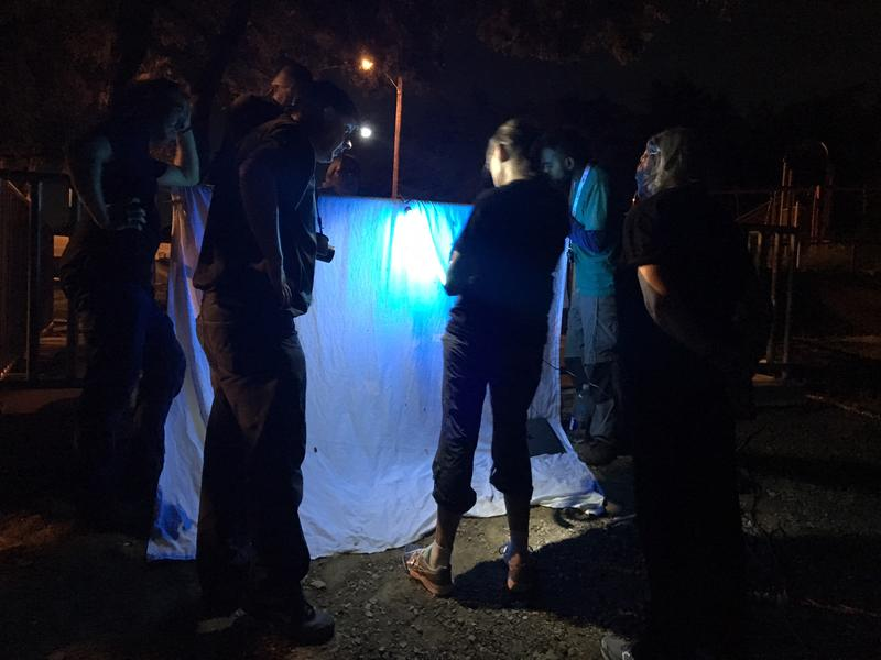 Citizen scientists in North Texas get together to look at insects in East Dallas. They use white sheets and black lights to attract moths after dusk.