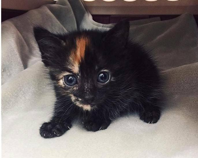 "Humane Society of North Texas named the kitten ""Komodo"" and will keep her until she's old enough to be adopted."