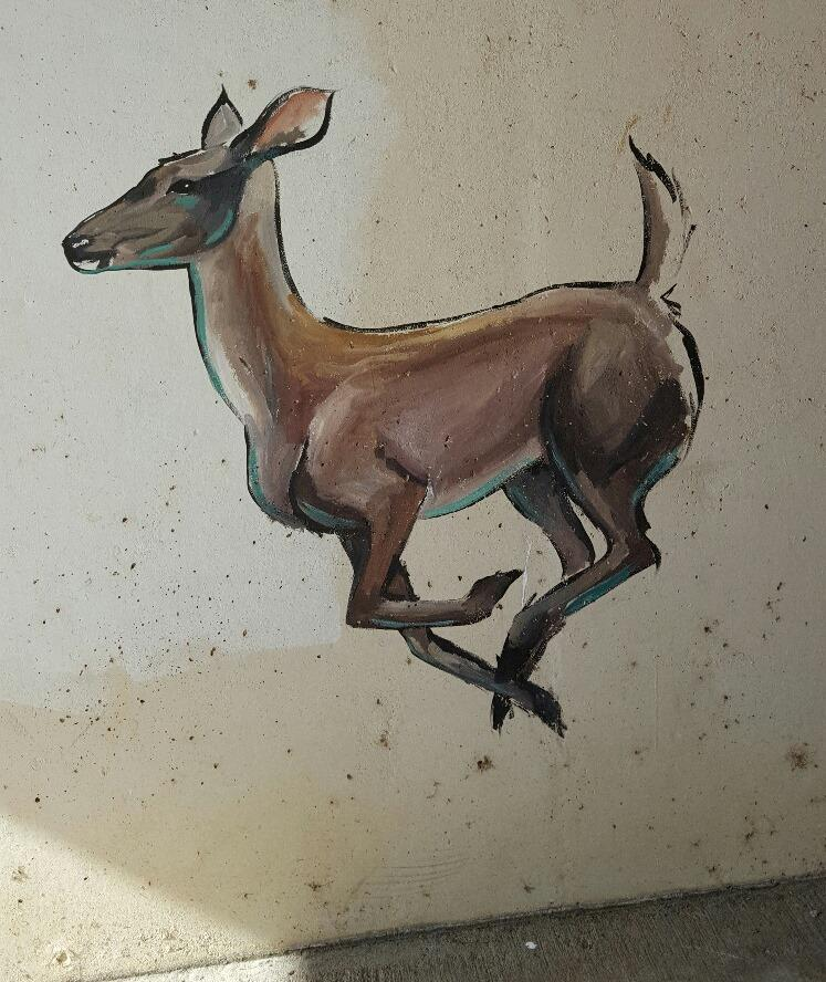 Parks & Recreation Department staff first discovered a portrait of a doe in the tunnel under the Bear Creek Parkway along the Keller trail system earlier this month.