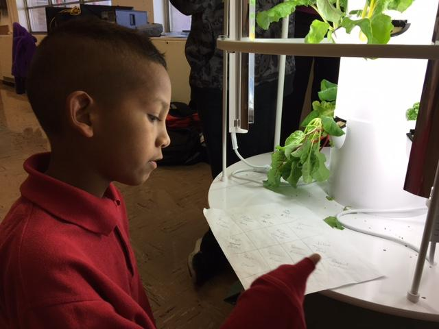 Jesús Cruz tries to figure out which seedling he planted.