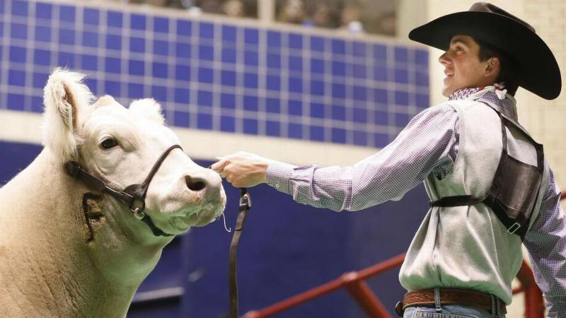 Ben Bezner parades his European crossbred steer named Mufasa for bidders during the Sale of Champions at the Fort Worth Stock Show Saturday.