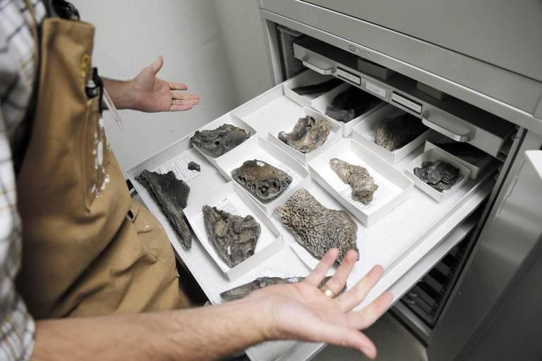 Ronald S. Tykoski, director of the Paleontology Lab at the Perot Museum of Nature and Science at Fair Park, shows the fossilized bones of Deltasuchus motherali, a dinosaur-eating crocodile, dug up in north Arlington.