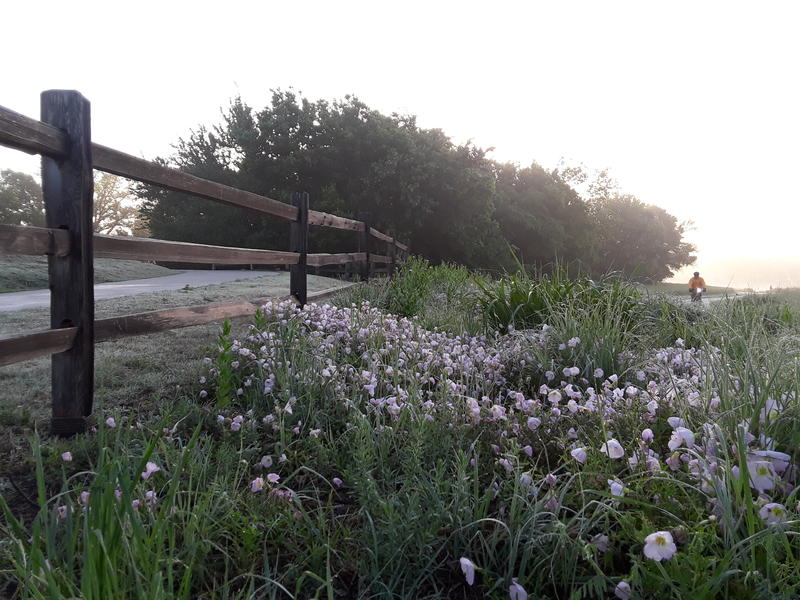 Oak Point Park and Nature Preserve in Plano.