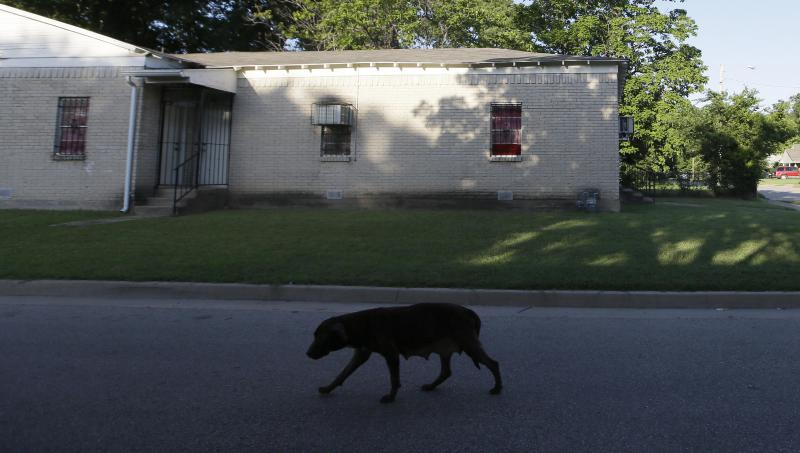 In 2016, a stray dog wandered a southern Dallas, Texas, neighborhood where Antoinette Brown, a homeless Army veteran, was killed by a pack of dogs.