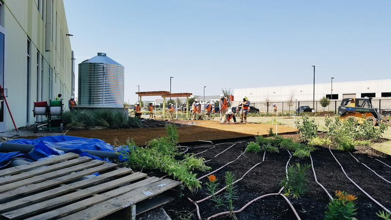 Workers spread mulch in the community garden at the North Texas Food Bank's new Plano campus.