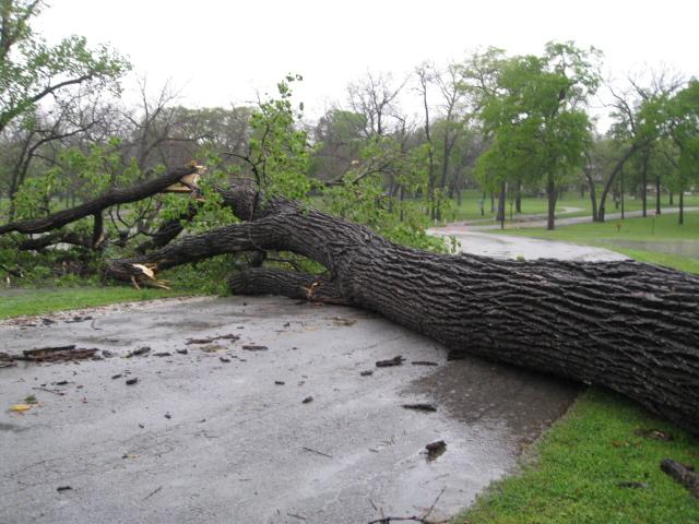 A tree downed by the storm blocked a road at White Rock Lake in Dallas