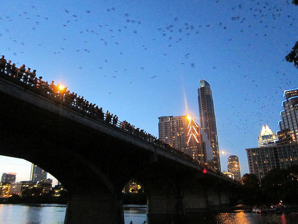 Send in the bats: Visitors flock to the Congress Avenue Bridge in Austin to watch the bats.