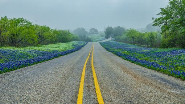 Forget the yellow brick road. Let's follow the bluebonnet road.
