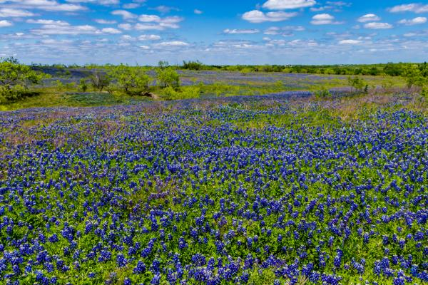 Can you ever get tired of looking at bluebonnets? Nope.