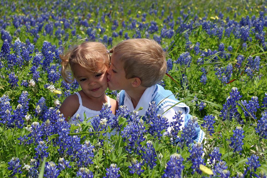 amazing things you should know about texas bluebonnets  kera news, Beautiful flower