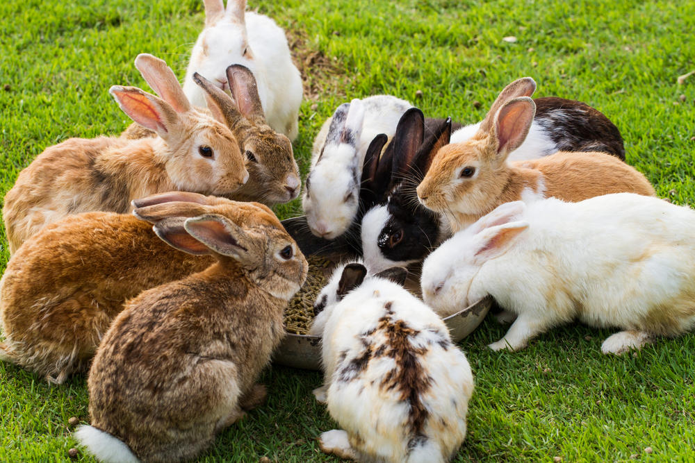 rabbits pets or dinner whole foods under fire for