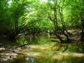 Hardwood bottomland forest is increasingly rare in Texas. Estimates place the amount of hardwood bottomland forest in the roughly 70,000-acre Marvin Nichols Reservoir site at about 30,000 acres.