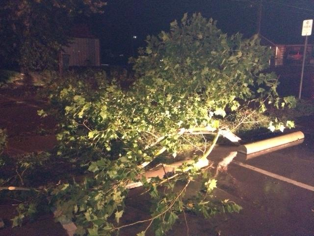 Downed tree on Monroe St. in Commerce