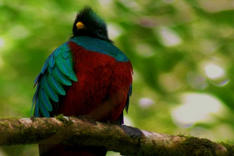 Few people get to see the resplendent quetzal, a bird revered by Pre-Columbian Mesoamerican civilizations.