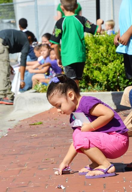 2-year-old Isabella Salas picks up candy thrown in the parade