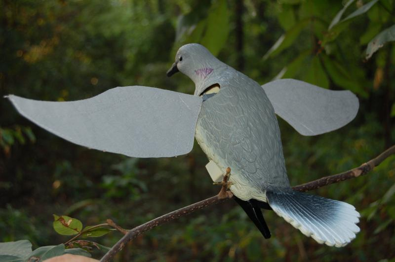 This is an 'action' type flapping wing dove decoy.  Dove decoys such as this can be very useful in getting late season doves in close for the shot.