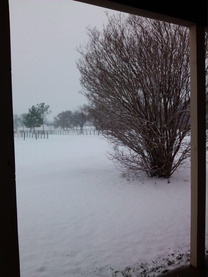 Snow, snow, snow! - Campbell