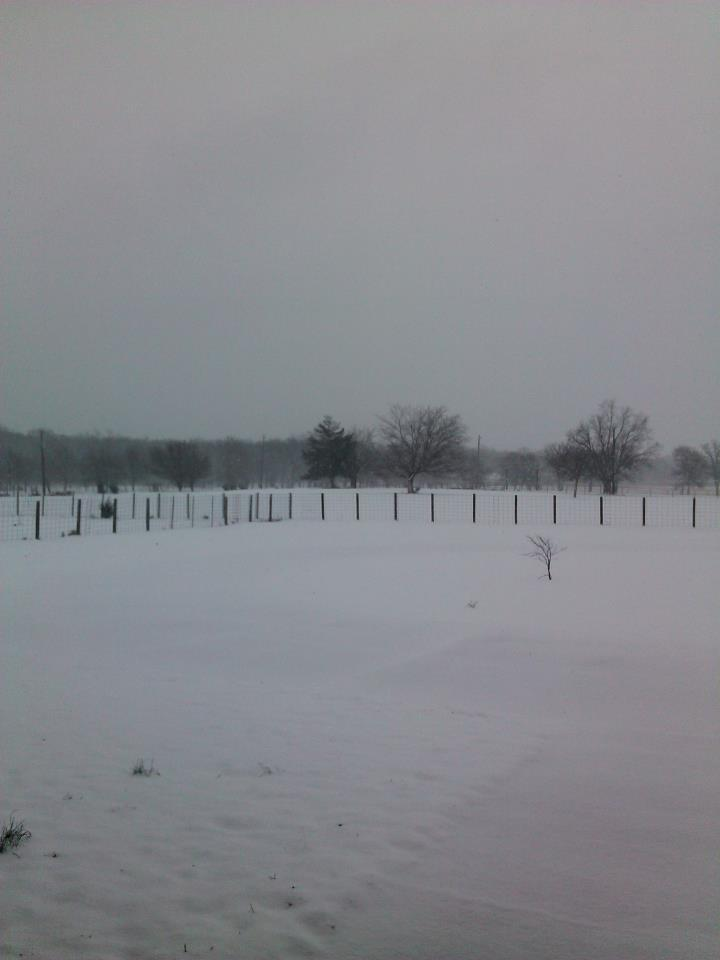 Snowy Pasture near Campbell