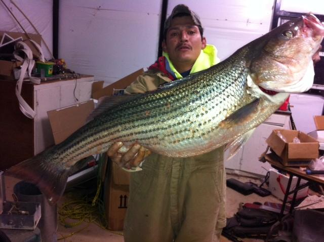 Big Striper from Lake Texoma