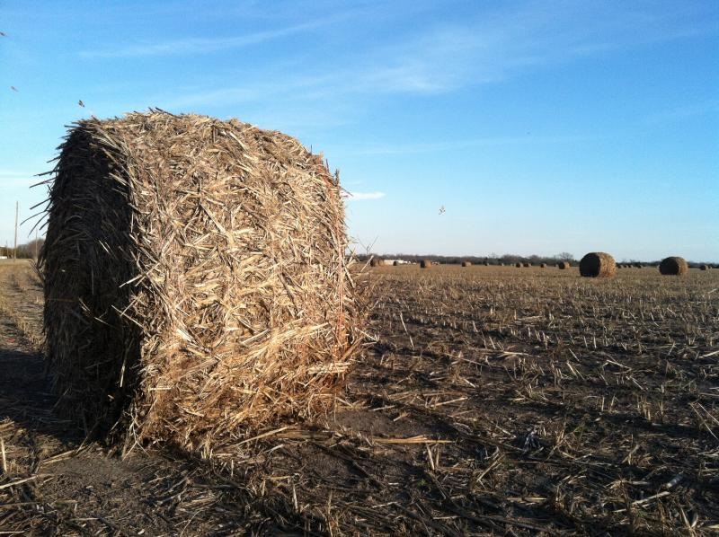 Large rolls of hay dot a  field in western Hunt County, just north of the NETEX right-of-way.