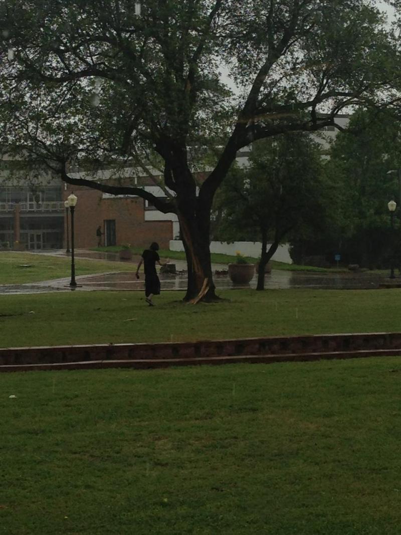 Lightning struck a tree outside the Rayburn Student Center