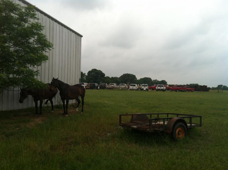 A couple of horses browse as work trucks sit nearby at Red'Arc Farm.