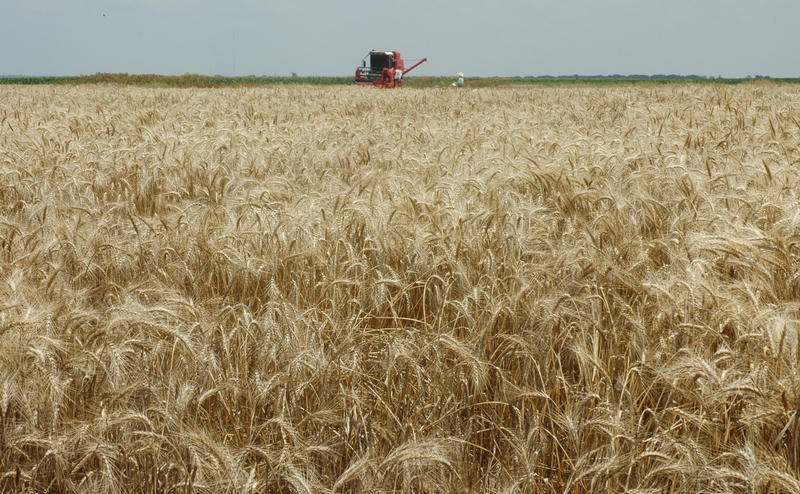Much of Texas' winter wheat is harvest-ready.