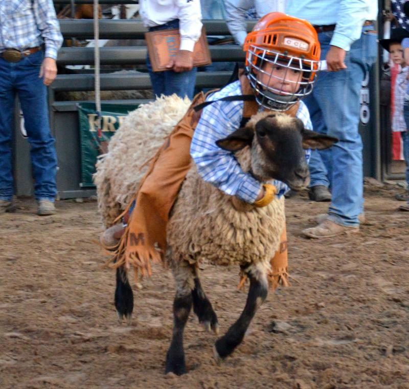 Dustin More displayed his frist-prize form in mutton bustin'.