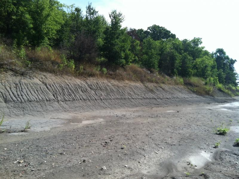 Silt and sands make up most of the riverbed's floor.