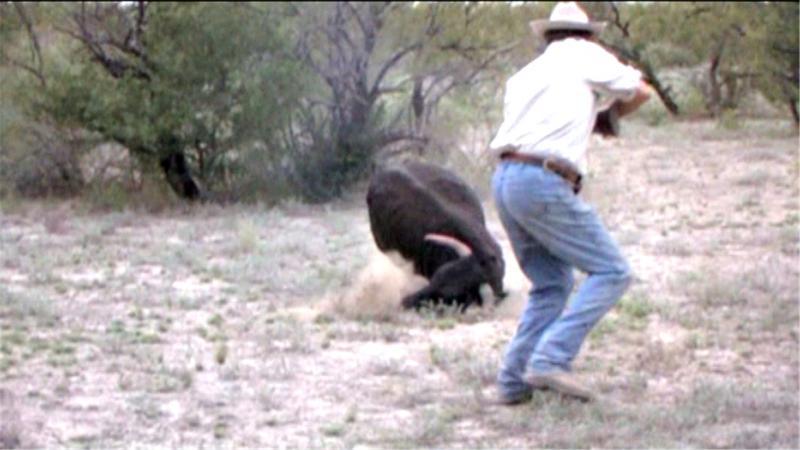 Dennis Erskine hunting the San Mateo fighting bull